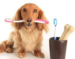 DENTAL CLEANING.