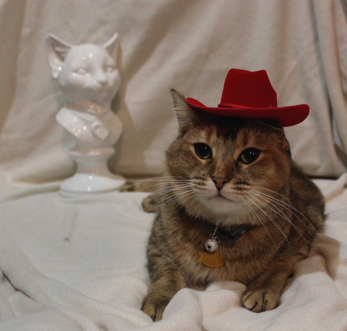 Aristocat Hats is the premier brand for Cat hats or hats for cats ... 3c98ffbf98e4