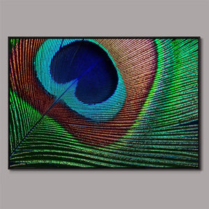 Vibrancy Framed Canvas