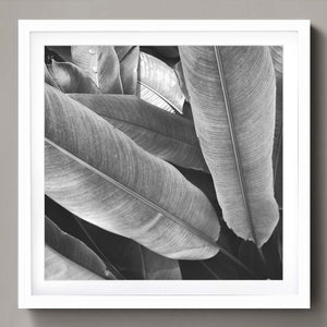 Tropical leaves b/w