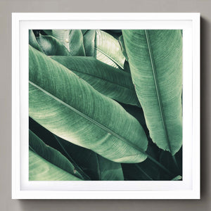 Tropical leaves (square)