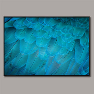 Teal plumage Framed Canvas