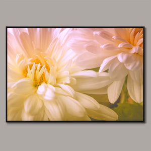 Chrysanthemums Framed Canvas