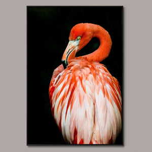 Flamingo at dusk Framed Canvas