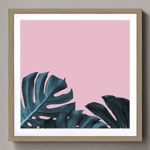 Fuschia  Monstera