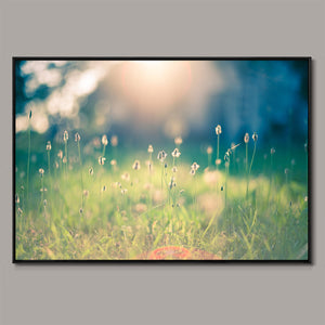 Morning in the field Framed Canvas