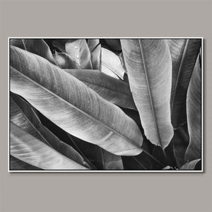 Tropical leaves b/w Framed Canvas