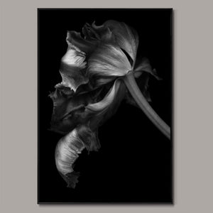 Tulip Silhouette Framed Canvas