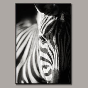 Zebra Framed Canvas