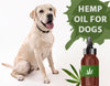 What Are the Benefits of Hemp for Dogs?