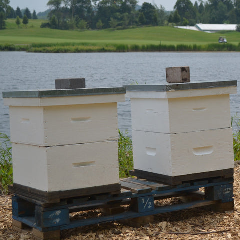2020 Double Brood Hive