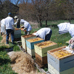 Introductory Beekeeping Workshop