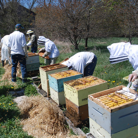 2021 Introductory Beekeeping Workshop