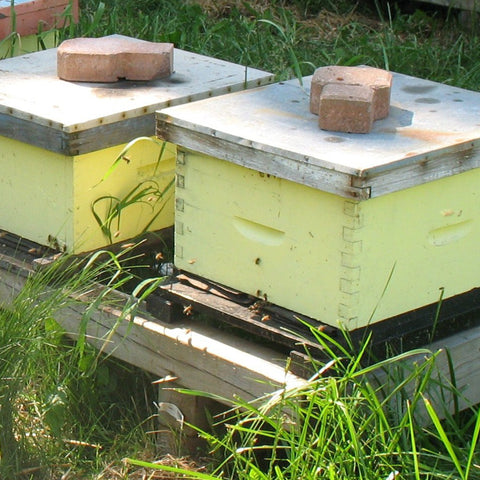 2020 Single Brood Hive