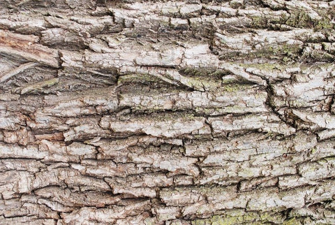 What are the benefits of willow bark for skin