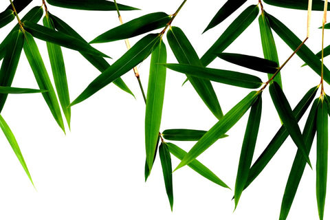 Bamboo Extract Sustainable Skin Benefits