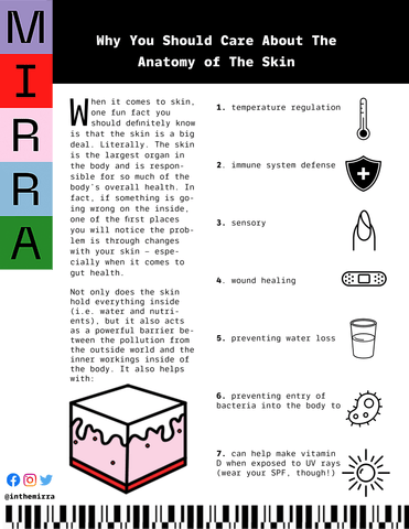Why You Should Care About the Anatomy of the Skin I Mirra Skincare