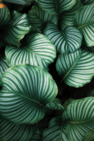 10 Benefits of Houseplants Including Reduced Stress and Clearer Skin   Mirra Skincare