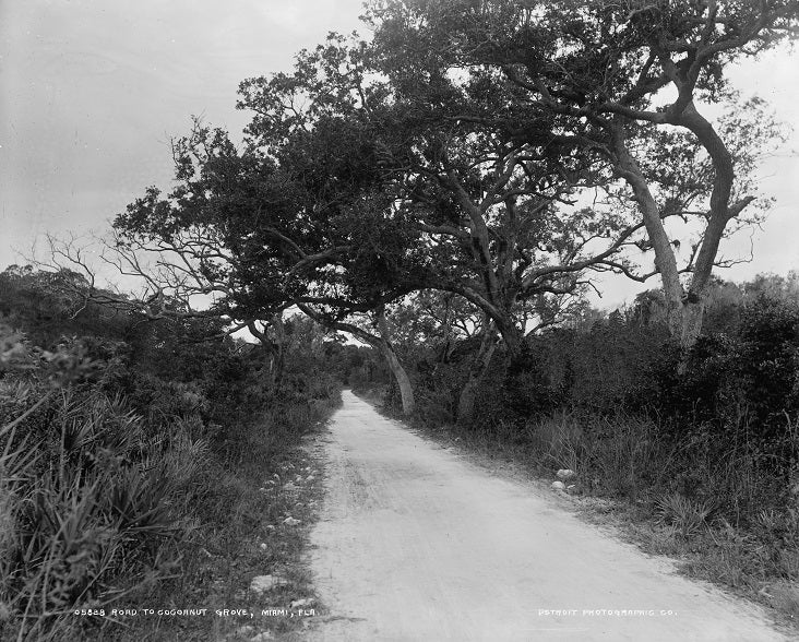 Road to Coconut Grove 1890s Print