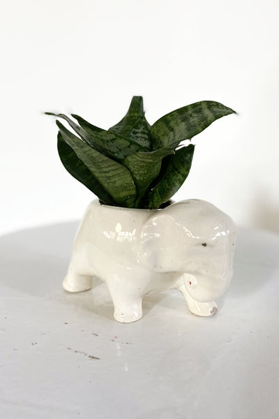 Vintage Elephant Planter with Snake Plant