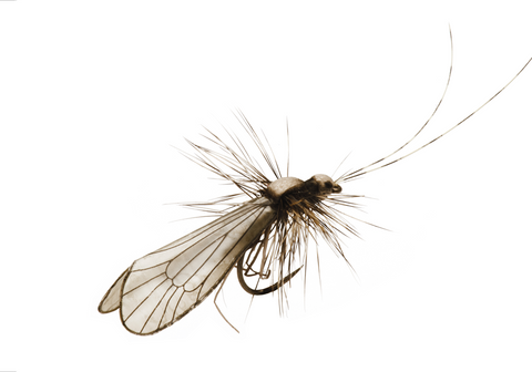 Caddis Fly Tying Instructions