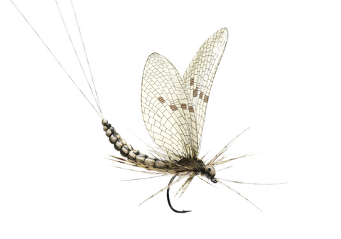 Mayfly Dun tying instructions