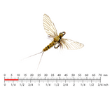 J:SON REALISTIC MAYFLY SPENT 4 #22