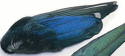 Magpie Whole Wings