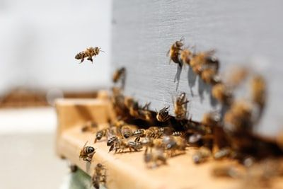 Introduction à l'apiculture - option 2