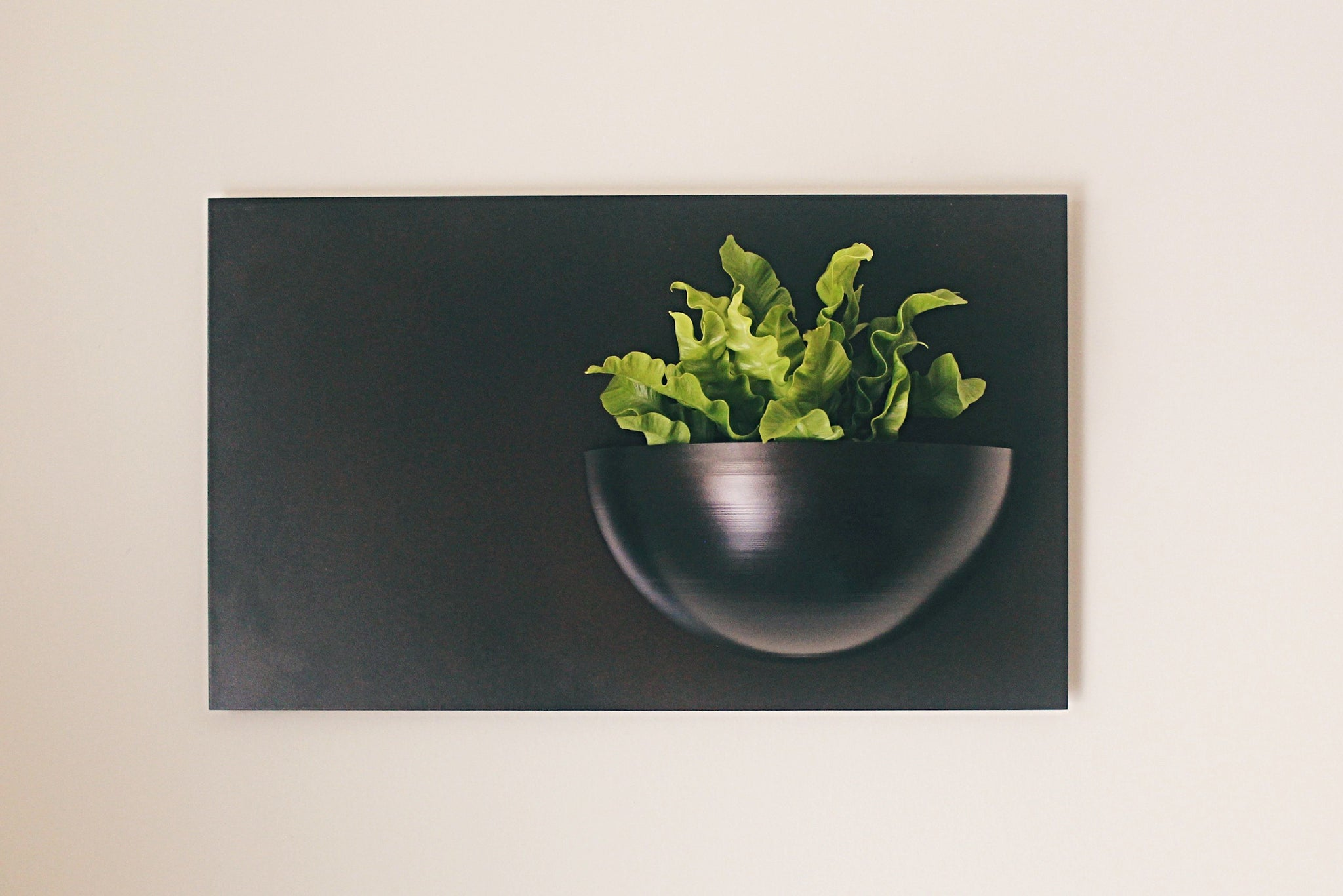 Horizontal Wall Mount Planter