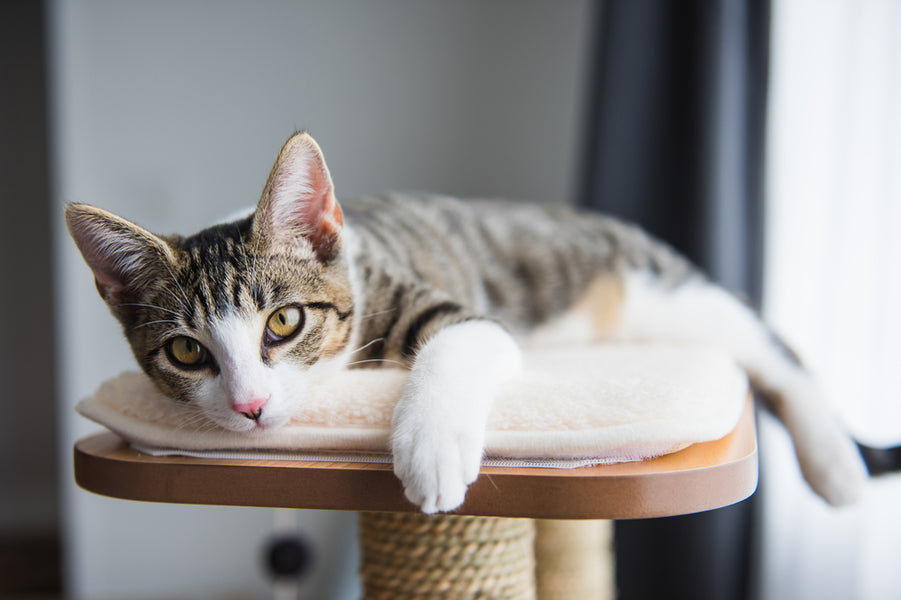 9 Ways to Enrich the Life of Your Indoor Cat