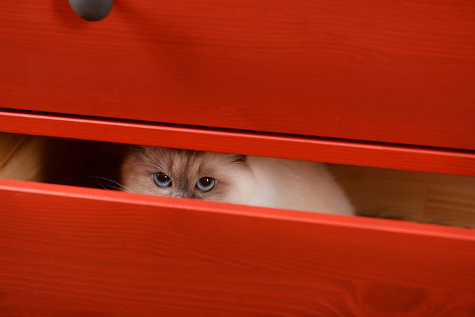 Why Do Cats Like Small Spaces?