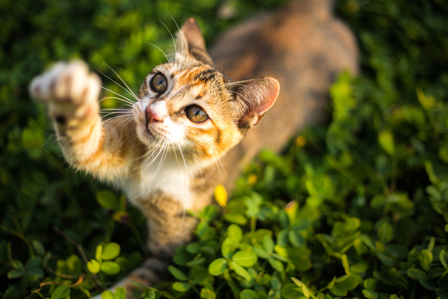 5 Ways to Be an Eco-Friendly Cat Owner