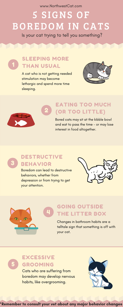 5 Signs of Boredom in Cats Infographic
