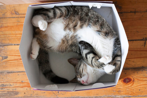 Striped cat in box