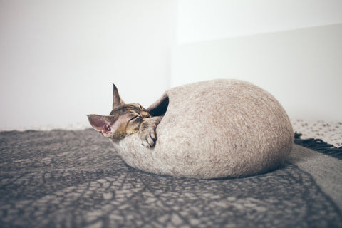 Cat sleeping in felt cat cave