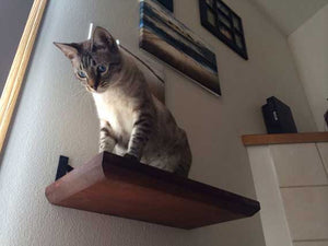 Solid Cat Shelf