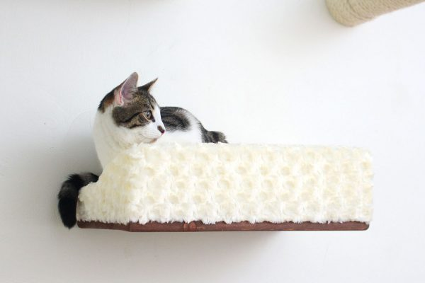 Large Plush-Padded Cat Bed/Shelf