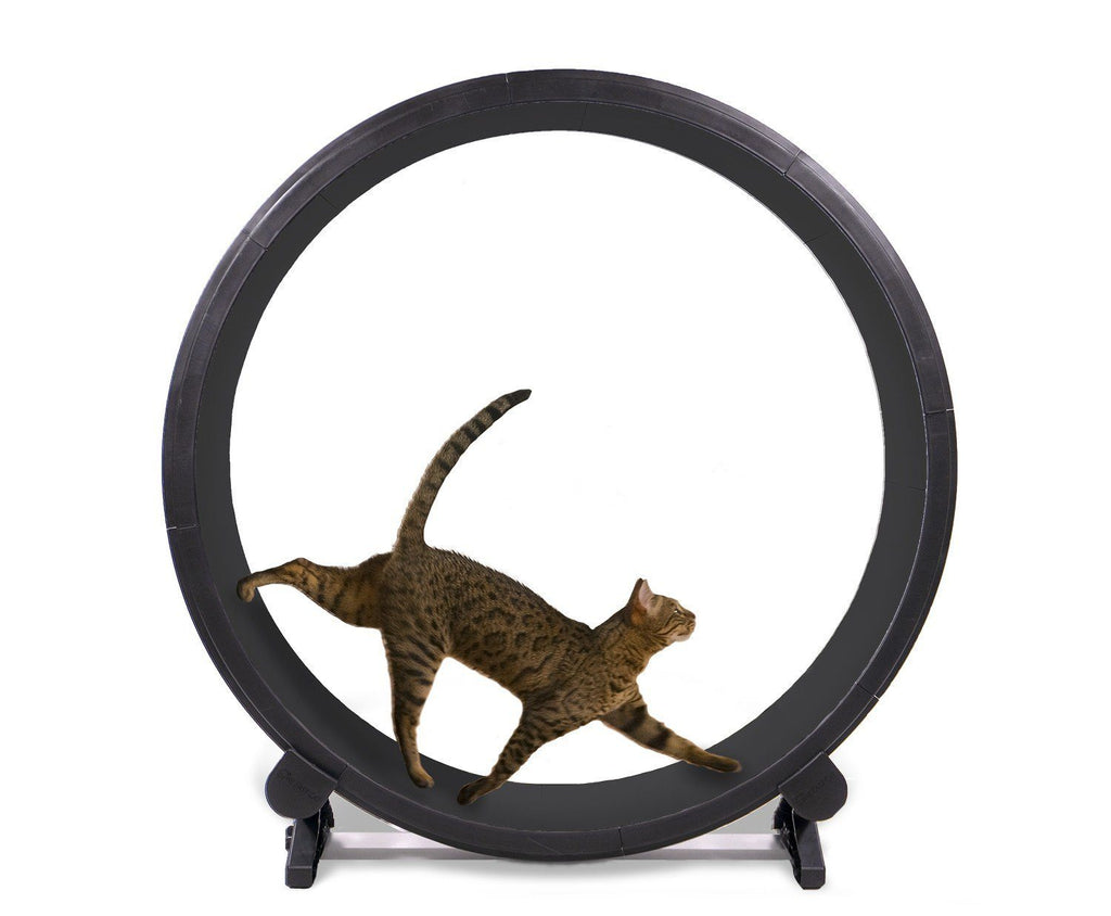 One Fast Cat - Cat Exercise Wheel Black