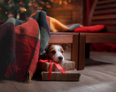 How to Prepare Your Dog for Holiday Guests and Reduce Stress