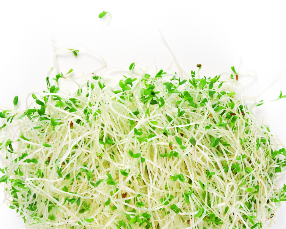 The Benefits of Alfalfa for Dogs