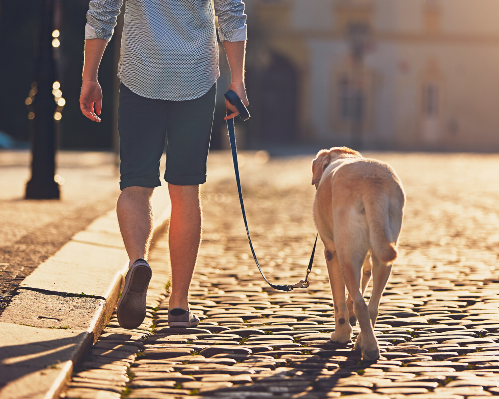 Loose-Leash Walking with Your Dog
