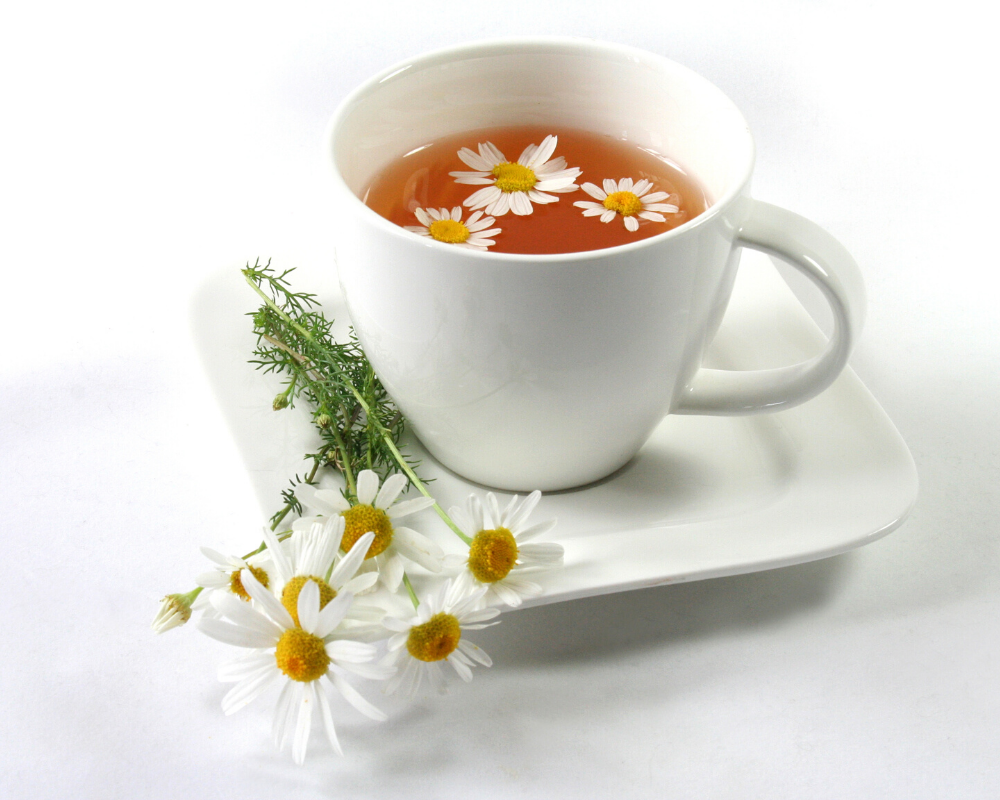 Chamomile and Its Benefits for Dogs