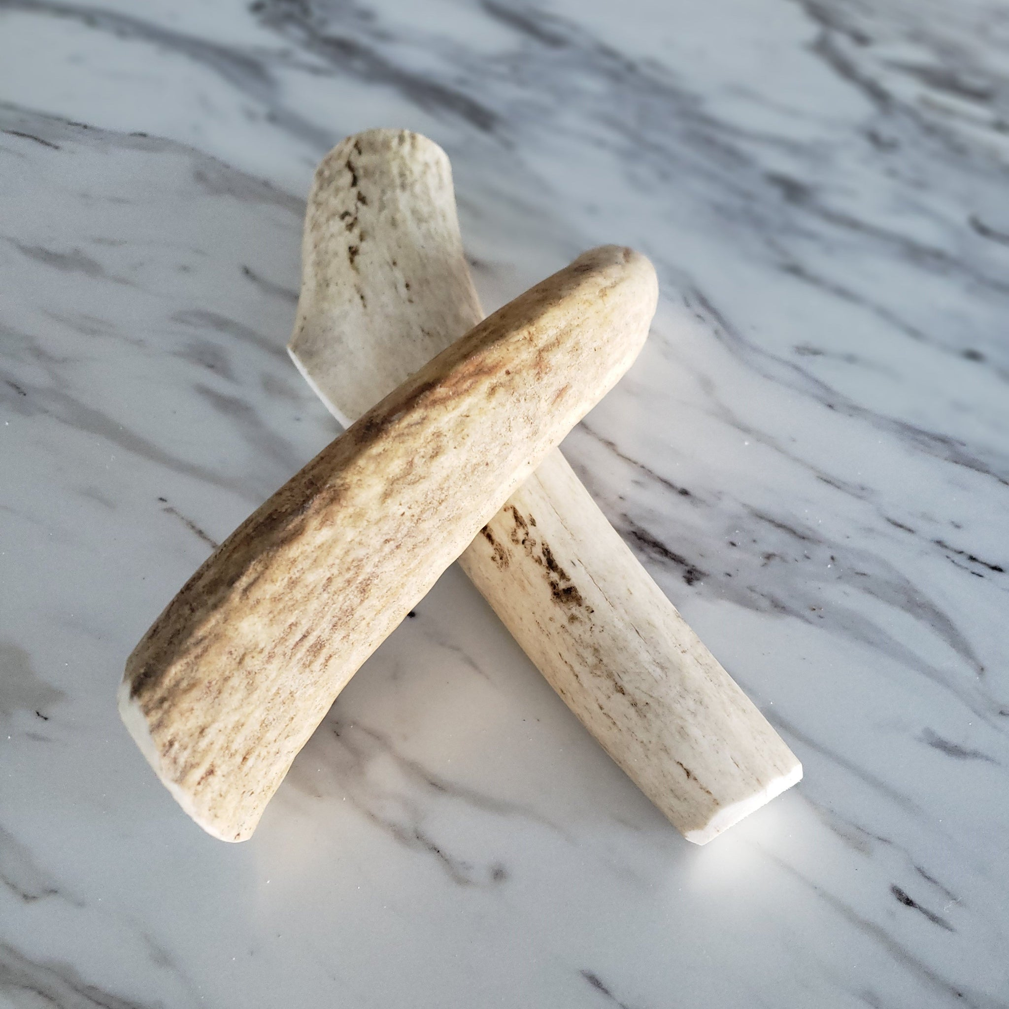 Small Whole Elk Antler Dog Chew