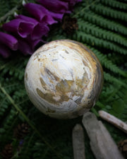 Petrified Wood Crystal Ball