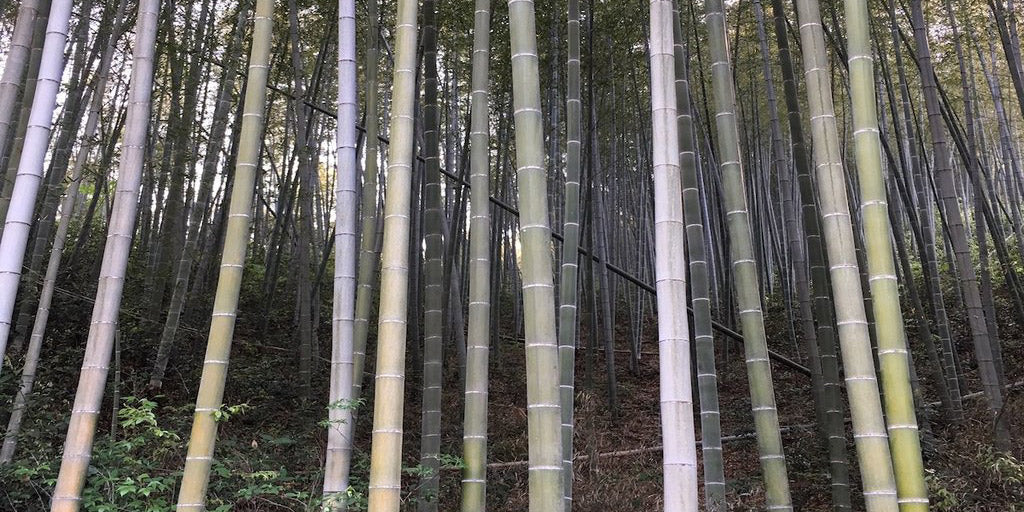 Much Ado about Bamboo