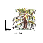 L is for Live Oak. The Angel Oak is a Southern live oak tree located on Johns Island. It is estimated to be 400-500 years old, with a shaded area that covers around 17,500 square feet.