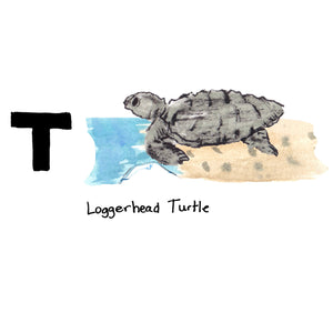 T is for Loggerhead Turtle. This endangered species was named the state reptile in 1988 after the approved request of a fifth grade class. Coastal residents take their protection very seriously by keeping lights off at night so not to confuse the newly hatched baby turtles with the moon which directs them towards the ocean.