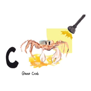 C is for Ghost Crab. Hunting ghost crabs never gets old for beachcombers of any age.