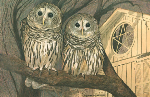 I - 86  Barred Owls